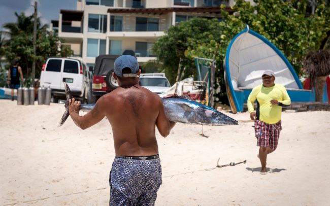 Walk Into Town 016 650x406 - Another Beautiful Summer Day in Playa del Carmen Mexico
