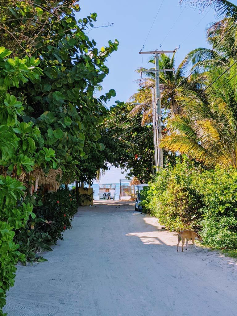 jasmin matt caye caulker belize wedding 002 - Caye Caulker, Belize